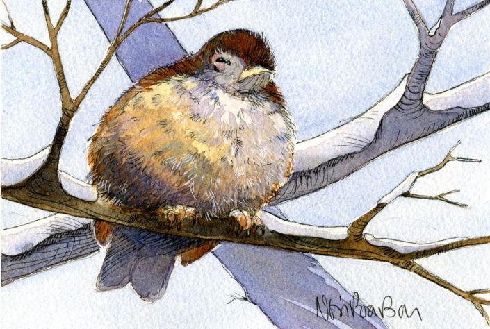 Huffy Puffy Bird